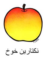 Peach Arabic