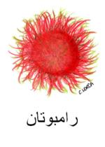 Rambutan Arabic