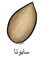 Sapote Arabic